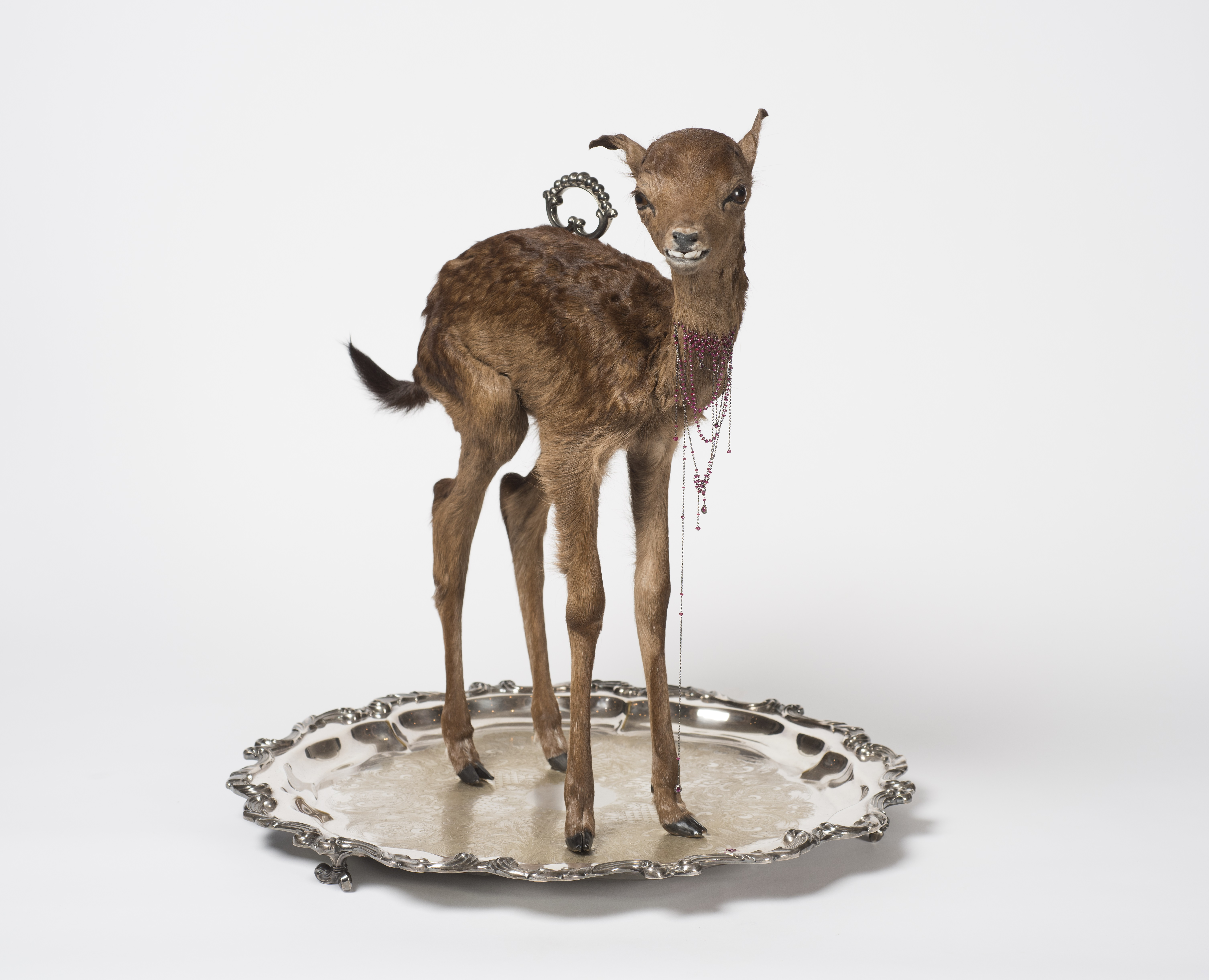 Julia deVille, **Sentience** 2012, stillborn deer, rubies 18.45 ct, pear-cut garnet 0.7 ct, 18 ct, white gold, sterling silver, bronze, black rhodium and antique platter. Collection Bendigo Art Gallery. Photo: Terence Bogue. Image reproduced courtesy of the artist.