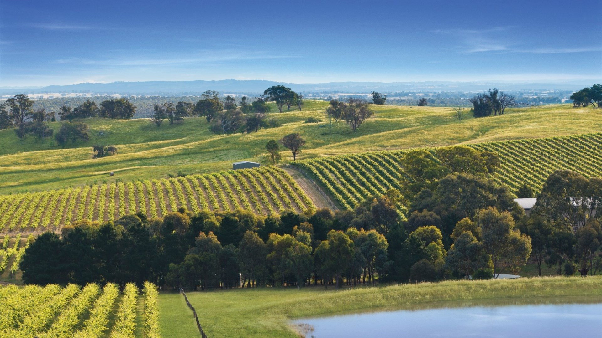 Bendigo Wine Region