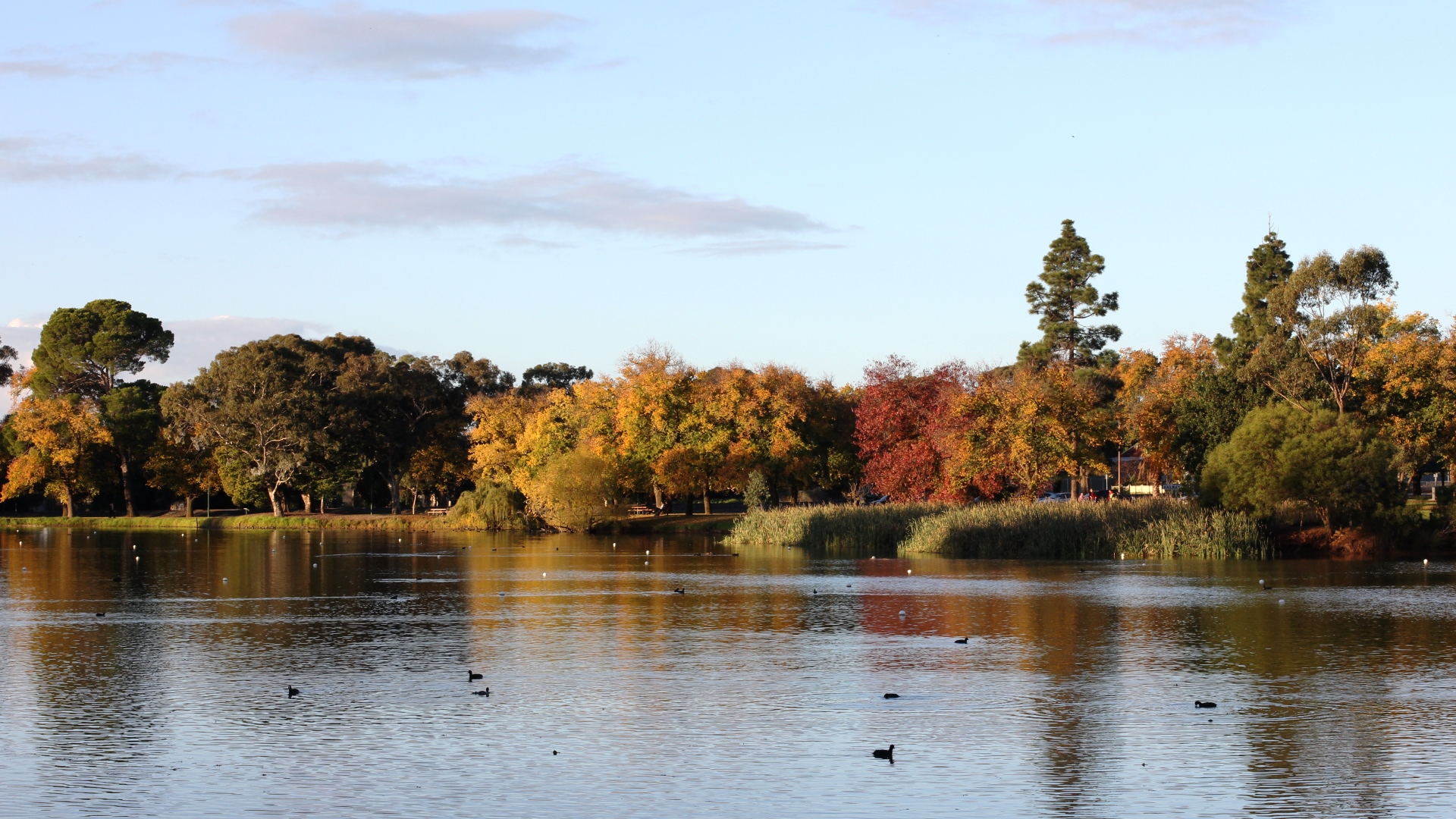 Lake Weeroona Bendigo