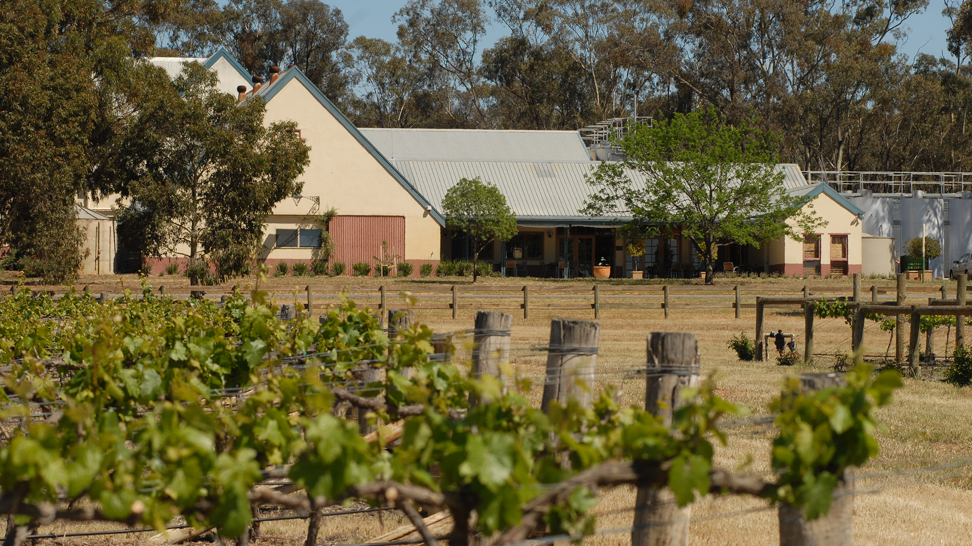 House and vineyards at Balgownie Estate