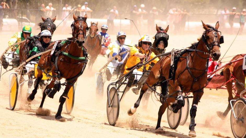 Wedderburn Harness racing