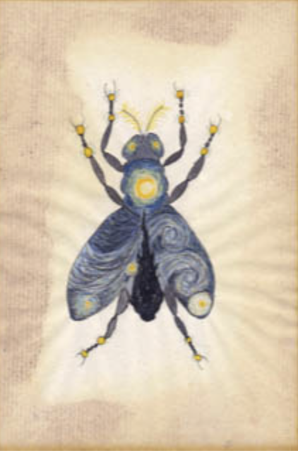 Blowfly by Sally Berridge
